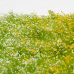 MiniNatur 726-31 vs The Army Painter Meadow Flowers BF4134 closeup
