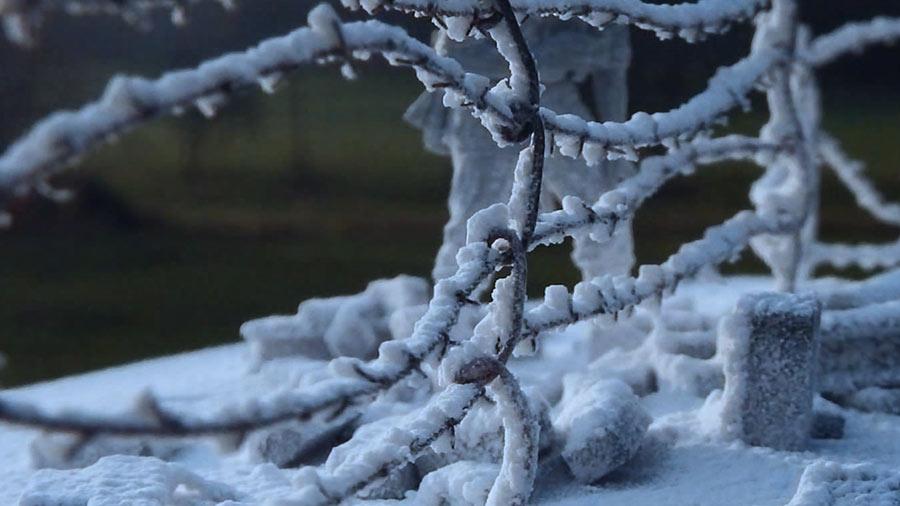 Krycell Snow op takken